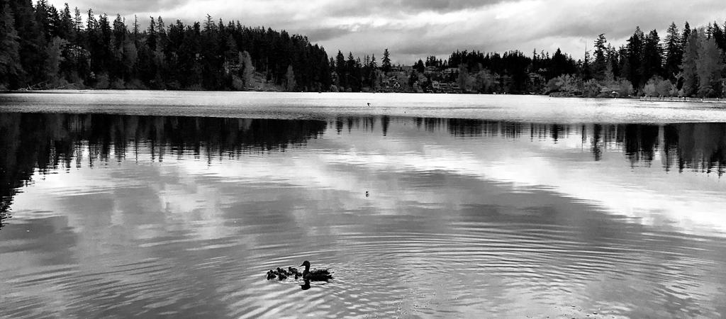 Silence. Quietness. Stillness. Post