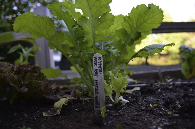 lettuce for post